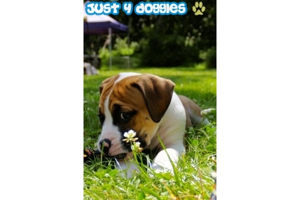 Galeria de imagenes de Just4Doggies